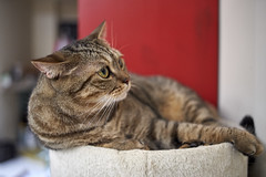 A9__DSC0040_C1 (Bazoka+Cynthia) Tags: cat delta 小婆 新北市 樹林區 貓