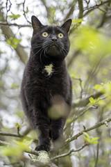 Highest perch (Artrocity) Tags: backyard artrocity charlton spring flowers tamron blackcat hunter cc100 frontbokeh cc1000