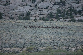 Wyoming Elk Hunt and Mule Deer Hunt 46