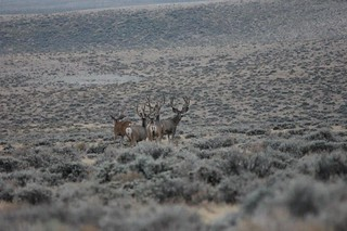 Wyoming Elk Hunt and Mule Deer Hunt 39