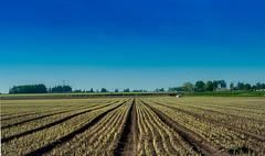 Salem/Keizer Oregon (danialficek1) Tags: nikon d5000 gobe nd hdr farm salem oregon salemoregon keizer keizeroregon sky blue rows country sunny