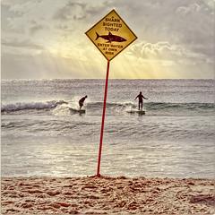 SHARK! (geemuses) Tags: shark surf sea water ocean beach alert surfers wave sun sand sign northsteyne manly nsw australia