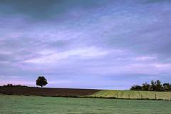 Less #2 (ulbespaans) Tags: minimalism minimalistic minimalismart lessimore lessismoreoutdoors less sky cloudscape landscape landscapephotography landscapephotohub agriculture agricultural green