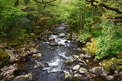 The River Plym tumbles off Dartmoor (Baz Richardson (now away for a few days)) Tags: devon dartmoor riverplym rapids rivers woods