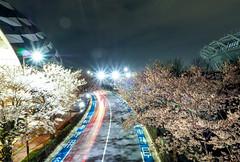 attractive Musashino Forest Sport Plaza (sapphire_rouge) Tags: 桜 夜桜 東京 sakura cherryblossom cherry nightcherryblossom hanami illumination 花見 ngc