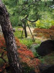 Koko-en Garden (anna.letoile) Tags: 好古園 姫路市 姫路 日本 自然 kokoen kokoengarden himeji japan nihon japantrip nature garden trees olympusomdem10markii olympus olympus25mmf18 bokeh harmony composition