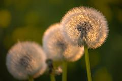 Dear Spring... (Rafael Zenon Wagner) Tags: als der frühling noch warm war