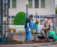 2019.05.04 Vermont Avenue Garden Blooms and Work Party, Washington, DC USA 01769