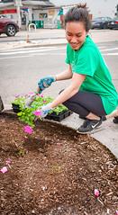 2019.05.04 Vermont Avenue Garden Blooms and Work Party, Washington, DC USA 01845