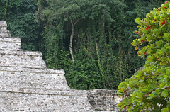 Nestled In The Jungle (peterkelly) Tags: digital canon 6d northamerica gadventures mayandiscovery mexico chiapas palenquenationalpark palenque lakamha templeoftheinscriptions stone pyramid temple jungle forest mayan maya