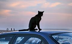 Vigilante (Zéza Lemos) Tags: algarve água anoitecer animais gatos gato mar portugal praia pordesol puestadelsol vilamoura pesca pescadores portodepesca