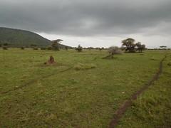 Animal Pathways across the Serengeti (jcharphotos) Tags: tanzania serengeti
