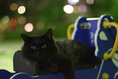 Black Cat (Flexible Negativity) Tags: 猫 cat 貓 meow ねこ caturday nuko k70 pentax blackcat