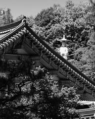 Bonguensa Temple (RW Sinclair) Tags: 1855mm 2019 bongeunsa fuji fujifilm fujinon gangnam ilcs korea may seoul spring temple xt1 xf1855 zoom mirrorless bonguensa lantern paper lanterns blackandwhite bnw bw mono