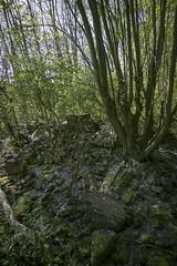 IMG_4207 (ickeliv) Tags: naturpark südgelände berlin germany