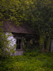 Abandoned house in the glen (http://www.paradoxdesign.nl) Tags: glen house cottage abandoned nature take over brick rock window overgrown bluebell blue bell spring decay olympus omd em10