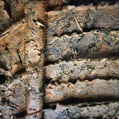 HMM ~ Four Elements edition (karma (Karen)) Tags: macromondays hmm fourelements dirt mud tiretreads texture htt