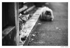 Stare-out (Aljaž Anžič Tuna) Tags: duel cat kitty dog pekingese street streetphotography stareout k9 photo365 project365 onephotoaday onceaday 365 35mm 365challenge 365project animal nikkor nice nikond800 naturallight nikon nikon105mmf28 105mmf28 f28 dailyphoto day d800 dof bw blackandwhite black white blackwhite beautiful