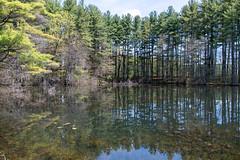 ashleyreservoir2019-34 (gtxjimmy) Tags: nikond7500 nikon d7500 tamron 150600mm ashleyreservoir holyoke massachusetts spring newengland