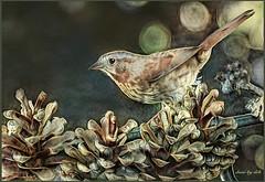 Sparrow Dream (done by deb) Tags: digitalbirdart digitalart digitalpainting deepdreamgenerator sparrow