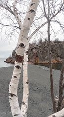 Black Beach (Lzzy Anderson) Tags: blackbeach onyxbeach taconite taconitebeach beach silverbay rock clouds stormclouds lake lakesuperior water tree trees birch birchtree 2019 may spring minnesota northshore upnorth