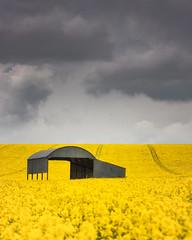 The Barn (Rich Walker Photography) Tags: dorset sixpennyhandley field rapeseed clouds cloud sky landscape landscapes landscapephotography landmark landmarks barn canon england eos eos80d farm