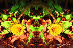 Dandelion (Stephenie DeKouadio) Tags: art artistic abstract abstractart abstractflower abstractflowers abstractpainting macroabstract macropainting colorful yellow hypnotique hypnotic darkandlight dandelion