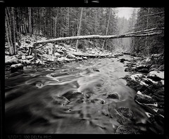 Cold Jungle (tsiklonaut) Tags: pentax 6x7 67 film analog analogue analogica analoog 120 roll medium format ilford delta 100 pro black white negro y blanco mustvalge estonia estonian eesti landscape winter talv maastik taevaskoda ahja jõgi river fallen trees cold külm ilu travel discover experience drum scan drumscan scanner pmt forest wild nature loodus talvine rocky riverbed taevaskoja ngc wood creek water tree