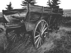 Day's Gone Bye ... Homeward Bound (Mr. Happy Face - Peace :)) Tags: pioneerdays vintage prairies farming earlydays explorers postcard albertabound patricia quote ngc yyc 150yrs wtbw canada150yrs black white bw art2019 spokes