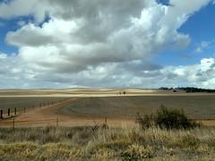 Bungaree - Flinders Ranges, South Australia (Marian Pollock) Tags: landscape australia southaustralia fields clouds sunny crops bluesky iphone bungaree