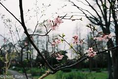 (g.f. Factory) Tags: leitz cl film filmcamara japan tokyo