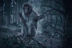 Snow Monkey 🐒 (benji.g) Tags: monkey affe sony sonyalpha sonyemount sonyg sonyalpha6400 photography amazing dark mysterious shiny mystisch animal beautiful schön