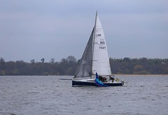 not fishing for complements (antrimboatclub) Tags: spinnaker atlantic challenge antrimboatclub boat sail sailing ireland sixmilewater loughneagh antrimbay antrim