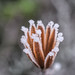 Frosty Dry Flower