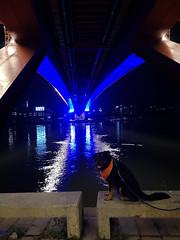 Belgrad (dinapunk) Tags: serbia night belgrade town city river water reflection lights bridge dog pet animal rottweiler