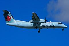 C-GTAT (Air Canada express - JAZZ) (Steelhead 2010) Tags: aircanada aircanadaexpress jazz dehavillandcanada dhc8 dhc8300 yyz creg cgtat