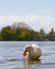 _B5A4691REWS Making a Splash, © Jon Perry, 4-5-19 zbq (Jon Perry - Enlightenshade) Tags: enlightenshade arranginglightcom jonperry river thames london strandonthegreen w4 hightide 4519 20190504 chiswick
