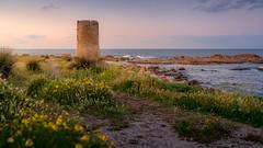 La Caletta, Sardinia, Italy (David Lea Kenney) Tags: coast coastline coastal fort flowers landscape seascape explore travel italy sardegna sardinia