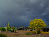 A Most Unusual Morning (oybay©) Tags: paloverde tree arizona suncitywest spring spring2019 color colors yellow cactus bloom sky stormy stormyweather clouds cloudy landscape