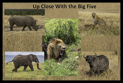 Up Close With the Big Five (Jill Clardy) Tags: africa continent kenya tanzania vantagetravel where safari collage big 5 five leopard lion elephant cape buffalo rhino rhinoceros