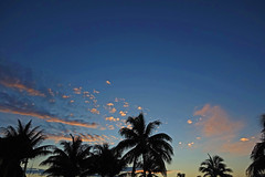 sunset - Playa Pesquero, Holguin, Holguín Province, Cuba - Feb 2019 (Dis da fi we) Tags: sunset playa pesquero holguin holguín province cuba palm palms tree trees sky cloud clouds blue hour silhouette