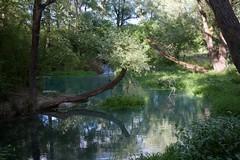 Parco Lavino (Maria Teresa D) Tags: parco natura lago lavino verde riservanaturale abruzzo italia decontra scafa