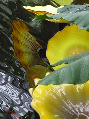 Chicago, Garfield Park Conservatory, Glass Flower Petals, Sculpture, Reflection (Artist: Dale Chihuly) (Mary Warren 13.8+ Million Views) Tags: chicago garfieldparkconservatory nature flora plants green leaves foliage yellow glass petals art sculpture dalechihuly
