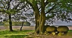 Hunebed D21 bij Bronneger (Dr) (henkmulder887) Tags: hunebed hunebedd21 d21 bronneger borger hondsrug drentsehondsrug trechterbekervolk grafvondst stenen ijstijd boom