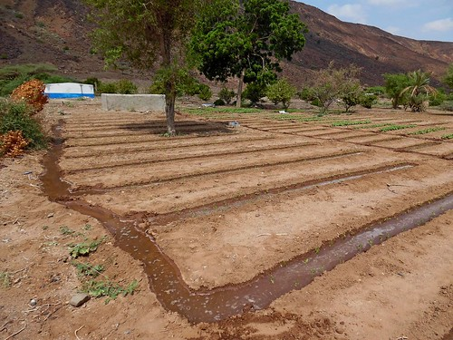 Well-based Small scale gravity irrigation, Djibouti (3)