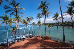 IMG_7298.jpg (Dhammika Heenpella / CWSSIP Images of Sri Lanka) Tags: dhammikaheenpella මිරිස්ස clusterofcoconuttreesbythesea ශ්රීලංකාවේචායාරූප ධම්මිකහීන්පැල්ල coconuttreehill ශ්රීලංකාවේෆොටෝ imagesofsrilanka srilanka mirissa කොකනට්ට්රීහිල් ශ්රීලංකාව traveldestination placesofinterest