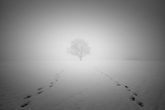 Foot prints... (lja_photo) Tags: tree woodland branch branches minimalistic minimal minimalism fine art nature photography pics natural light backlit fog foggy mist misty exploration winter wintertime frost cold white europe luxembourg madeinluxembourg ourluxembourg frozen ice outdoors abstract sky fuji xt20 haze landscape landmark contrast black bw bnw blackandwhitephoto no person monochrome monotone monoart moody mood