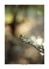 2019/3/9 - 15/21 photo by shin ikegami. - Lomography New Jupiter 3+ 1.5/50 L39/M (shin ikegami) Tags: sony ilce7m2 sonyilce7m2 a7ii 50mm lomography lomoartlens newjupiter3 tokyo sonycamera photo photographer 単焦点 iso800 ndfilter light shadow 自然 nature 玉ボケ bokeh depthoffield naturephotography art photography japan earth asia