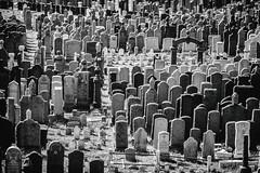 New York Cemeteries (Thomas Hawk) Tags: america brooklyn nyc newyork newyorkcity usa unitedstates unitedstatesofamerica bw cemetery fav10 fav25 fav50 fav100