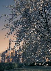 Gaverland Chapel - Belgium (roland_tempels) Tags: belgium melsele gaverland chapel blossomtree landscape sunlight supershot
